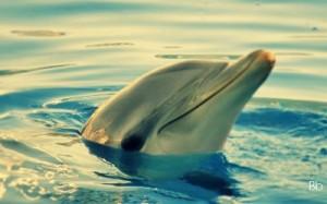 delfino 2 con firma